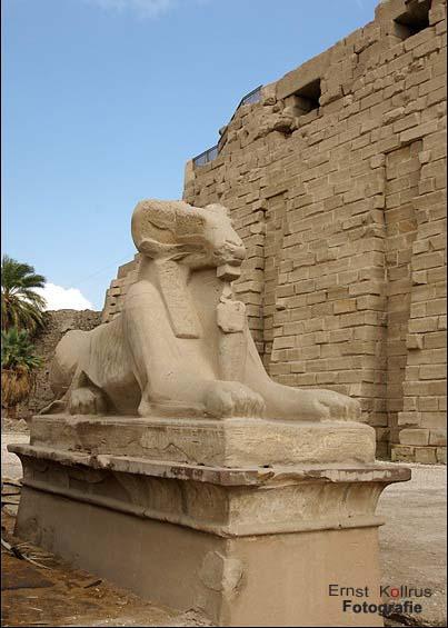 Widdersphinx ( Karnak )